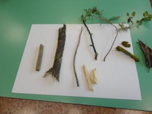N. 13 - le parti dell'albero (1) - gennaio
